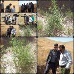 بازدید استاندار لرستان از پروژه بادام کاری  منطقه رازان