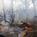 تشکیل تیم های عملیات واکنش سریع اطفا حریق در محیط زیست لرستان