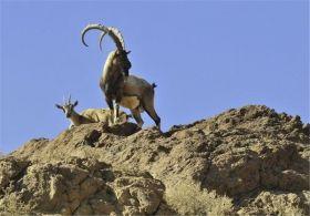 بازدید از منطقه حفاظت شده سفید کوه / افزایش ضریب حفاظتی مناطق تحت مدیریت در لرستان