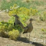 یک رکورد جدید در پراکنش حیات وحش استان لرستان ثبت شد