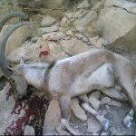 دستگیری شکارچی متخلف در لرستان/ پنج سال حبس تعزیری و ۳۴۰ میلیون ریال جریمه نقدی
