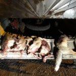 دستگیری ۲ گروه متخلف زیست محیطی در شهرستان سلسله