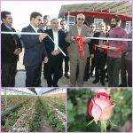 افتتاح و بهره برداری از گلخانه هیدروپونیک ویرا گل/ با ظرفیت تولید ۹۰۰ هزار شاخه گل در سال