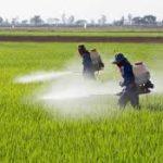 مبارزه با عوامل خسارتزای غلات به ویژه  گندم و دانه های روغنی در لرستان با جدیت و تلاش شبانه روزی در حال انجام است