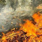 چرا جنگلهای زاگرس میسوزد؟