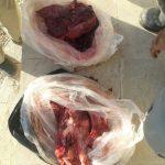دستگیری شکارچی تشی در پلدختر/ باورهای غلط شکارچیان موجب نابودی اکوسیستم می شود