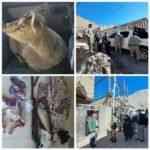 دستگیری عامل زنده گیری یک رأس بزغاله وحشی در شهرستان بروجرد