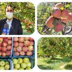 سالانه ۷۵ هزار تن سیب در لرستان برداشت میشود