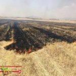 آتش زدن بقایای محصولات کشاورزی ممنوع و جرم محسوب می شود