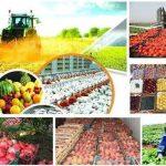 """احداث ۱۵ مرکز """"روستا بازار """" / عرضه مستقیم محصولات کشاورزی در لرستان"""