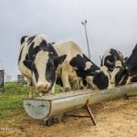 اثرات خشکسالی بر صنعت کشتارگاهی دام و طیور