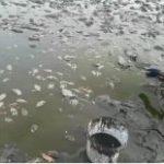 نجات ماهی های سد خشک شده ملاطالب ازنا توسط دوستداران محیط زیست