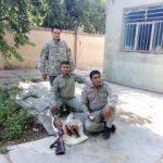 دستگیری شکارچیان بز کوهی در سلسله