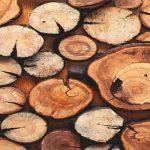 خانه چوب در بروجرد تاسیس میشود